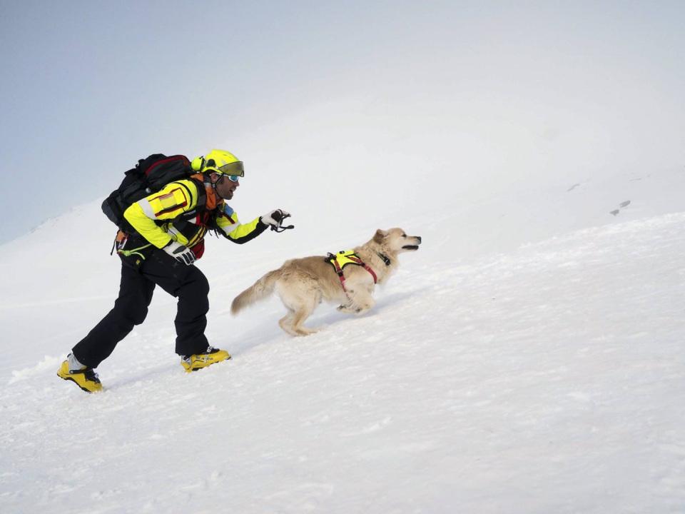 SAR-alps-italy-dog